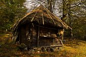 picture of serbia  - Wooden mountain hut at sunny autumn day - JPG