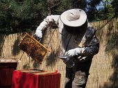 picture of beehive  - Beekeeper removing the honeycomb from a beehive - JPG