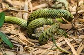 image of tree snake  - Snakes are fighting against the lizard to eat