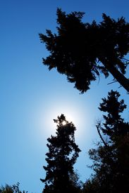 foto of mauri  - an unusual perspective creates a sense of surrounding while the backlit sun provides a central focus for the group of trees - JPG