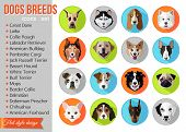 ������, ������: Set of flat popular breeds of dogs icons