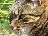 image of catnip  - the cool cat - JPG