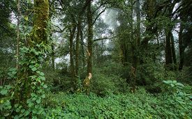 stock photo of rainforest  - landscape of green jungle with tree rainforest and mist - JPG