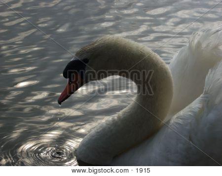 Swan 940 poster