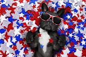 Independence Day 4Th Of July Dog poster