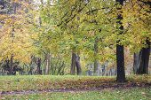 Autumn Park In The Morning In Cloudy Weather. Picture Autumn Park. September Landscapes In The Park. poster