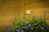stock photo of outhouses  - A still life from a garden - JPG