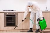 Professional contractor doing pest control at kitchen poster