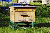 stock photo of bee keeping  - Bee apiary  - JPG