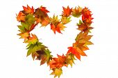 the colorful messenger of autumn. leaves on a white background in a heart shape. symbol for love pho