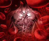 foto of cardiovascular  - Blood system and circultaion with a human heart cardiovascular icon with anatomy from a healthy body on a background with blood cells as a medical health care symbol of an inner organ as a medical health care concept - JPG