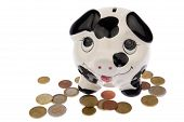 pic of cash cow  - Piggy bank with black and white cow spots looking upwards and standing in a variety of Euro coins isolated in white background - JPG