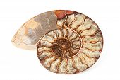 Beautiful Ammonite Mineral Isolated