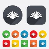 pic of conch  - Sea shell sign icon - JPG