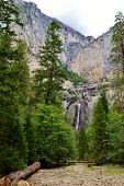 picture of redwood forest  - The beautiful giant redwood forest in California - JPG
