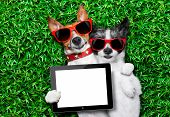 image of dog park  - couple of dogs in love very close together lying on grass holding a blank and empty tablet pc or touchpad as a banner - JPG