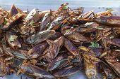 stock photo of exotic_food  - The exotic food menu in thailand is fried insect - JPG