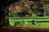 image of buggy  - Empty seat and buggy in open parkland.