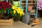 picture of plant pot  - Flowers in pot on chair - JPG