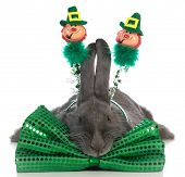 stock photo of tame  - st patricks day bunny wearing green bowtie on white background - JPG