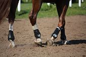 foto of breed horse  - Close up of horse legs with protection boots during riding lesson - JPG