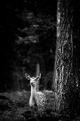 stock photo of deer rack  - Whitetail Deer Buck standing in a woods - JPG