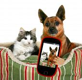 stock photo of mutts  - a dog and a kitten in a pet bed taking a selfie together - JPG