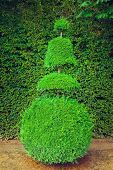 stock photo of garden sculpture  - Topiary bush grown in french ornamental garden - JPG