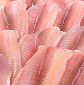 picture of pangasius  - In the picture a group of pangasius fillets arranged in a row and pattern - JPG