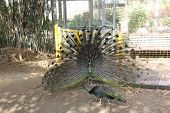 picture of bird fence  - The box is made of wire - JPG
