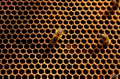 picture of honeycomb  - Yellow beautiful honeycomb with honey and close up view of the working bees on honeycomb - JPG
