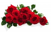 image of bunch roses  - Red roses in a bunch isolated on a white background with space for text - JPG