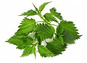 stock photo of common  - common nettle  - JPG