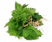 image of common  - common nettle  - JPG