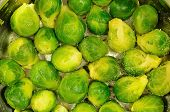 foto of brussels sprouts  - brussels sprouts in a cooking pot - JPG