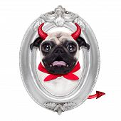 Постер, плакат: Halloween Devil Dog