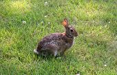 stock photo of thumper  - waiting rabbit in the green grass meadow - JPG