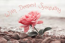 foto of sympathy  - one rosy rose flower at the stony beach text  - JPG