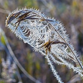 image of novosibirsk  - The first frost. Cobwebs on the grass covered with frost. Russia,Siberia,Novosibirsk region,Kolyvan district, coast of the river Chaus ** Note: Shallow depth of field - JPG