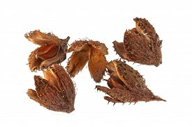 picture of beechnut  - Beechnuts and husks on a plain white background - JPG