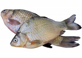 image of fin  - White river crucian fish fishing carp isolated tail fin animals - JPG
