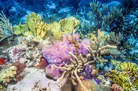 foto of fire coral  - Coral reef scene with purple vase spones and fire coral - JPG