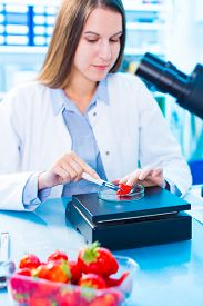 image of pesticide  - checking food Strawberries - JPG