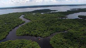 pic of rainforest  - Aerial Shot of Amazon rainforest in Brazil - JPG