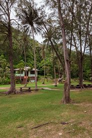 pic of garden eden  - The tropical garden with palm trees and road - JPG