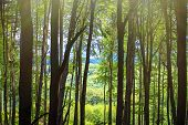 Spring Warm Day In The Forest. Summer Warm Sunny Day In The Forest.bright Green Forest Natural Walkw poster