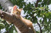 Ginger Kitten Sitting On A Tree Branch On A Sunny Summer Day. The Kitten Is Looking To The Left. In  poster