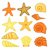 Colorful Tropical Shells Underwater Icon Set Frame Of Sea Shells, Vector Illustration.summer Concept poster