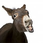 stock photo of white horse  - donkey  - JPG