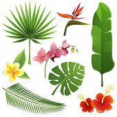 stock photo of bird paradise  - Set of tropical leaves and flowers - JPG
